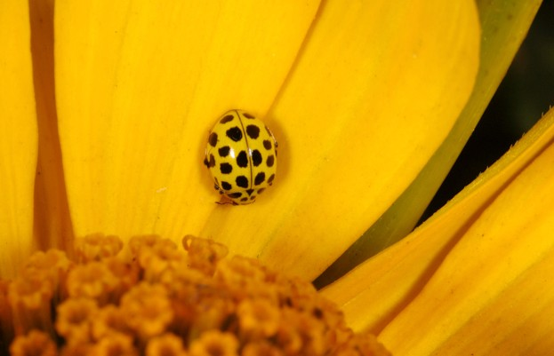 22-spot-ladybird_Keith-Porter_Getty_623-bb5b29b