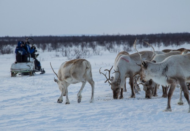3-reindeer623-46a29de