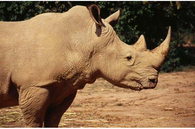 UGANDA, Entebbe Wildlife Park White Rhino  ©Nic I Anson / Eye Ubiquitous
