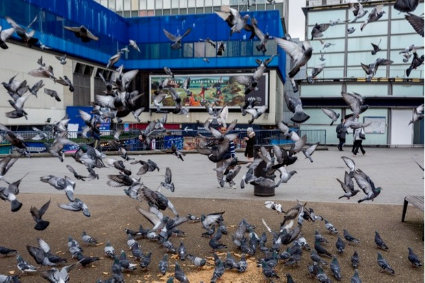 A flock of nervous pigeons take-off en-masse in front of Elephant and Castle shopping centre, on 29th March, 2018 in London, England. (Photo by Richard Baker / In Pictures via Getty Images)