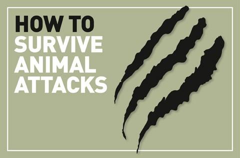 Animal-attacks_logo-fbccde2