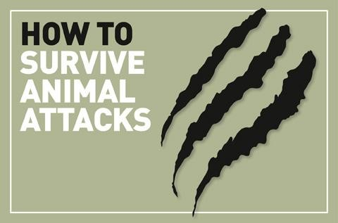 Animal-attacks_logo_0-3661877