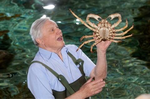Attenborough-001_article-a7b6175