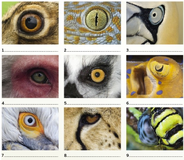 BBC-Wildlife-Christmas-Quiz_Can-you-identify-these-animal-eyes_623-8ee3532
