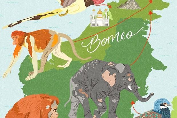 BBCWildlifeMagazine_Borneo_WEB_623-1d1f54e
