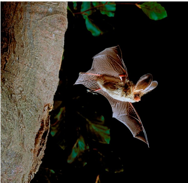 © Hugh Clark/www.bats.org.uk