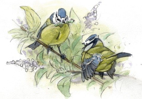BLUETITS_article-6f72072