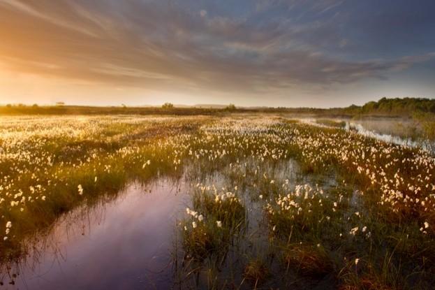 Ballynahone Bog, landscape view of bog at dawn, Northern Ireland, June