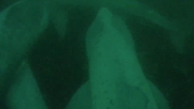 A still image from the footage showing three of basking sharks together © SNH / University of Exeter