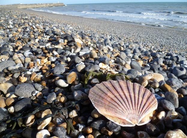 Beachcombing_wanda_623-ac1a725