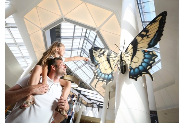 The exhibition includes a swallowtail butterfly © Big Bugs on Tour