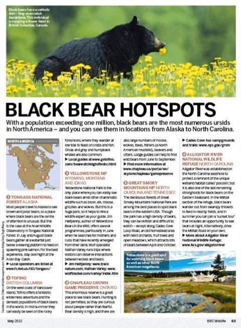 Black-Bears_P63_480-d0a3e68