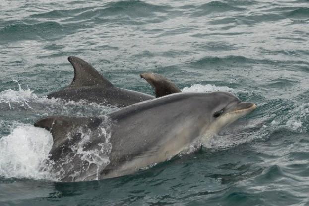 Bottlenose-Dolphin-by-Rhian_623-9889c2d