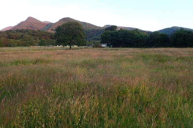 Cae'r Ddôl is being restored to a wildflower meadow. © Robbie Blackhall-Miles