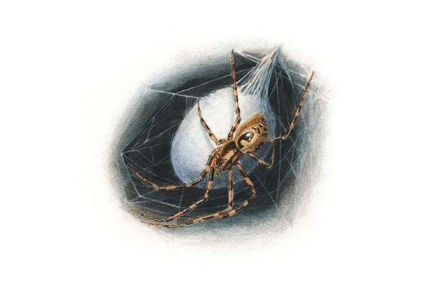 Cave spider. © Sandra Doyle/The Art Agency
