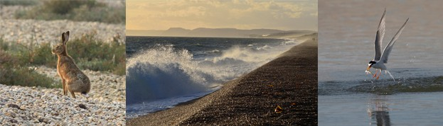 Chesil_comp-86b3114