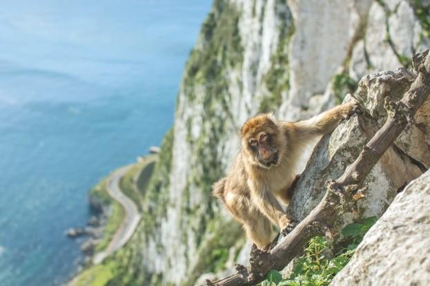 Cliff-climb-wide_623-a196a30