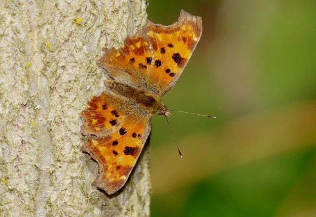 Comma_Gary-Chalker_Getty-Wiltshire_623_0-8ff6be2