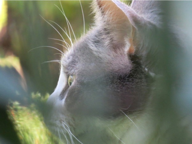 Corbin-the-cat_Liz-Turner_623-0c6f986