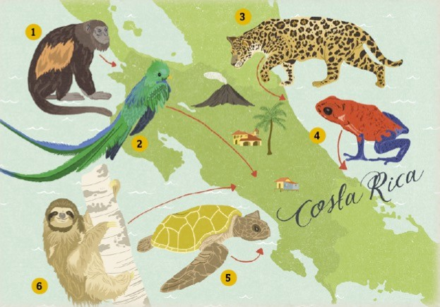 Costa-Rica-illustration-by-Dawn-Cooper_623-4b6a483