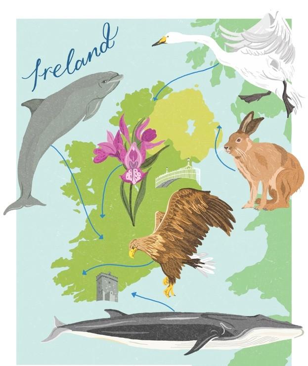 DawnC_BBCWildlifeMagazine_Ireland_Colour1_FlattenedCMYK_623-39c27bc