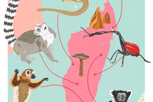DawnC_BBCWildlifeMagazine_Madagascar_Colour1_623-27444d4