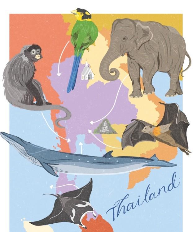 DawnC_BBCWildlifeMagazine_Thailand_Colour1_FlattenedCMYK_623-e13cd11