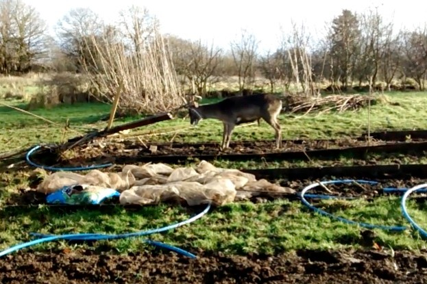 Deer-rescue_January-2018_623-3b11d15