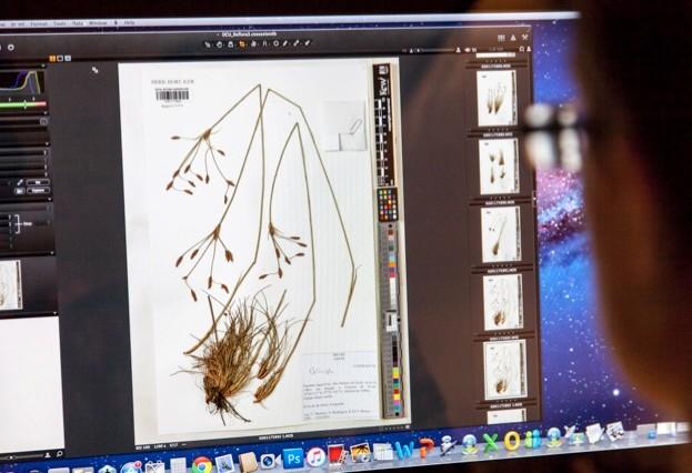 Filing plant specimens in the Herbarium, RBG Kew.