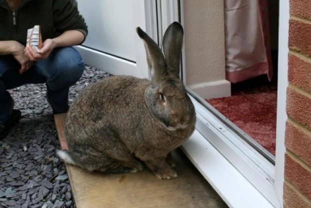 Domestic-rabbit_Richard-Southon_623-2c3d99c