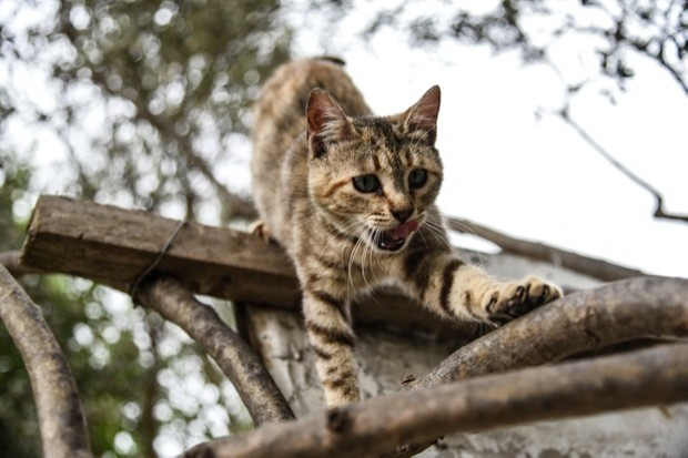 The hunting success of domestic cats varies according to their habitat © Wassilios Aswestopoulos / NurPhoto / Getty