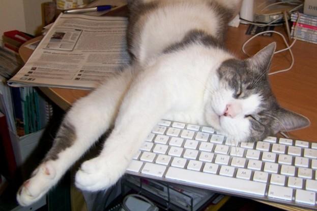 Domesticated-Corbin-the-cat_Liz-Turner_623-27acae7