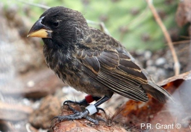 Finch-with-credit_623_0-26248d6