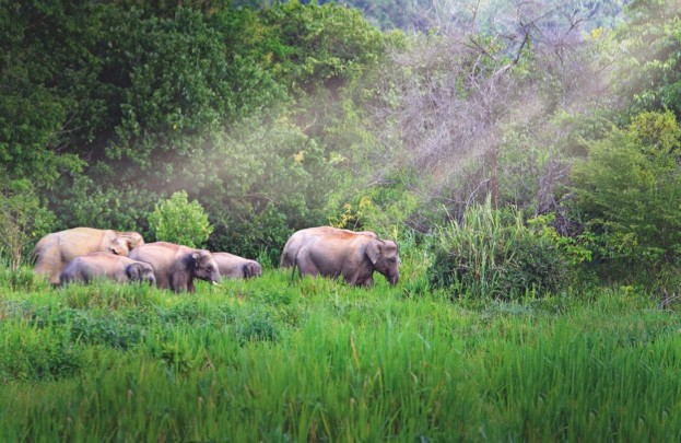 Wild elephants roam Kui Buri National Park - one of the best places to see them in the wild in Thailand (find out more about how to see Thai elephants at the bottom of the page) © Kosin Sukhum / Getty