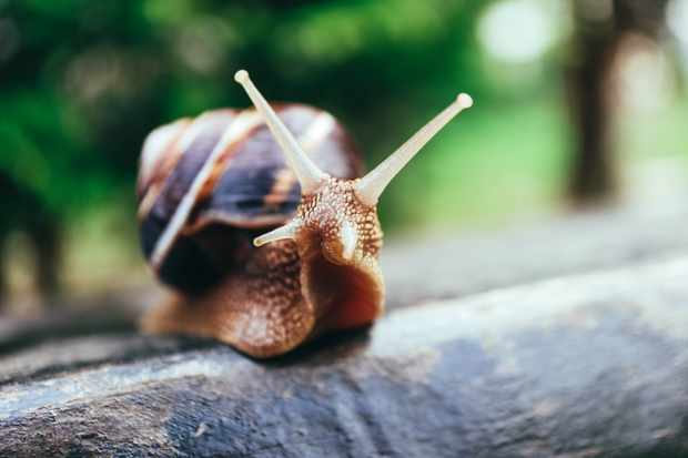 Snail. © Alice Fox/Getty
