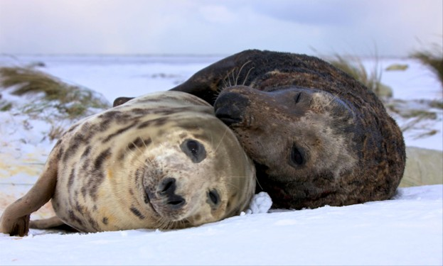 Grey-seals-and-stress-_-623-8691b0d