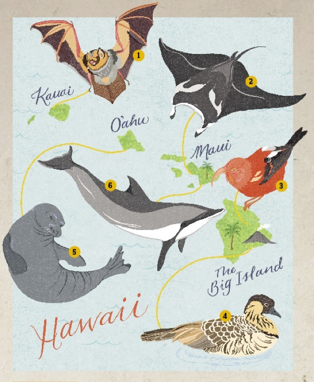 Hawaii-illustration-by-Dawn-Cooper_623-a6c9f8c