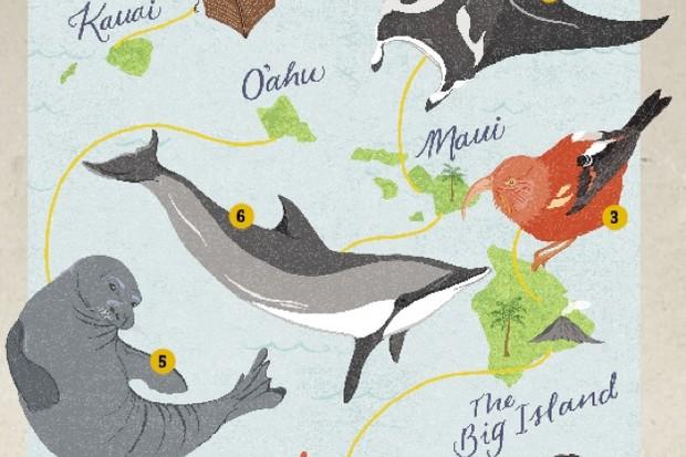 Hawaii-illustration-by-Dawn-Cooper_623-a6c9f8c