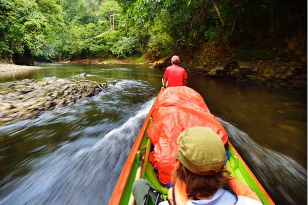 The journey upriver to Nanga Sumpa Longhouse is just the start of the adventure but even from the boat orangutan are frequently spotted.