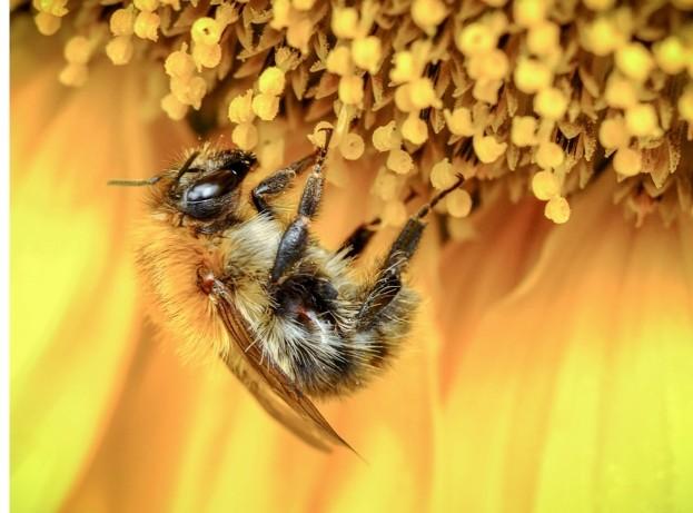 Honey-bee-Nuzulu-Getty_623-f399268