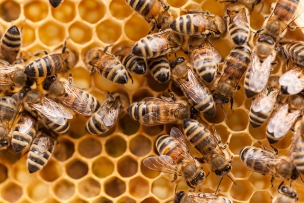 Honeybees_Kerstin-Klaassen_Getty_623-e539ca0