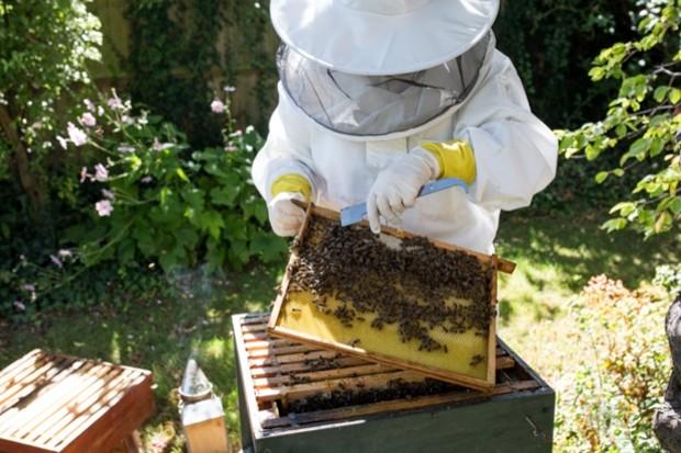 Honeybees_Matilda_Delves_623-d4c9e00