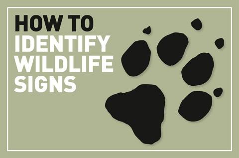 ID-Signs-logo_7-f121372