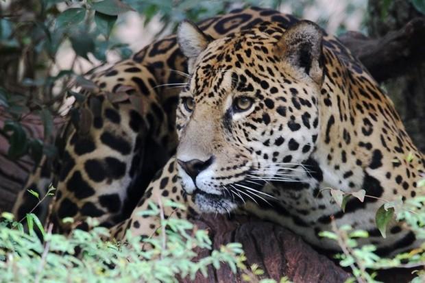 Jaguar_PhillippeDebled_623-b59a5aa
