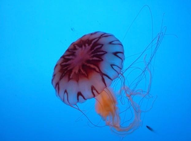 Jellyfish_Max_Xie_iStock_623-928fe72