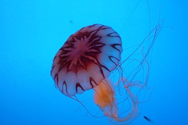 8 things you didn t know about jellyfish discover wildlife