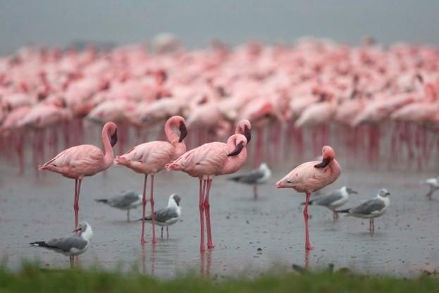 Joanne-Knight_Flamingoes-2-4a6ea4d