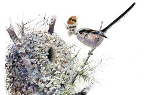 LT-Tit-at-nest-2-7a7b601