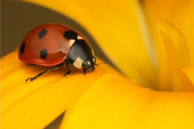 Ladybird_mattcole_623-41df1d2