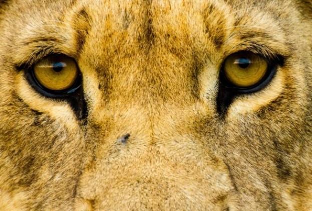 Lions_KymIllman_623-1816b52